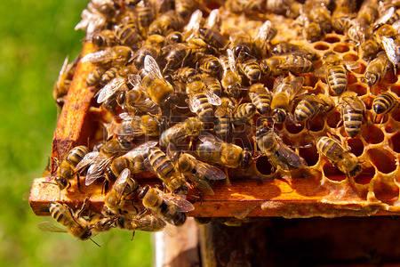Déclarez vos ruches !